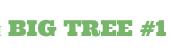 Big Tree - курсы английского языка